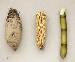 végétaux-pour-bioplastique